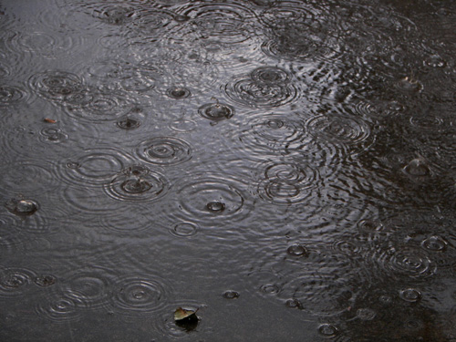 A Picture of Rain